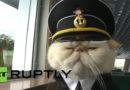 Video: Ryska katter håller ordning på fartyget