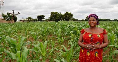 Gammal metod för effektivt jordbruk