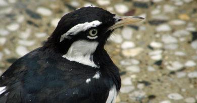 Gårdsmiljö gynnar hotade fåglar