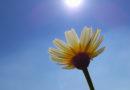 Nya rön: Växtceller pratar om vädret