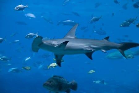 Ohållbart hajfiske fortsätter