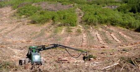 Två stora skogsägare väljer kalhyggesfritt