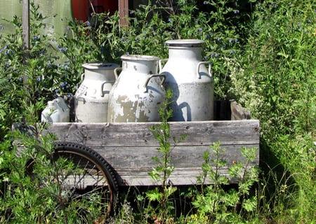 Den industriella driften av mjölkgårdar har låtit mjölkkrukorna rosta, men som konsument kan du vara med att vända utvecklingen. Foto: Britt-Marie Sohlström/CC BY-NC-ND 2.0
