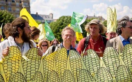 Grönt ljus till Monsantos GMO-majs i Frankrike