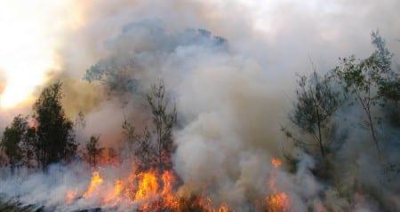 Bilden är ifrån en annan skogsbrand än den i Västmanland. Foto: bertknot/CC BY-SA 2.0