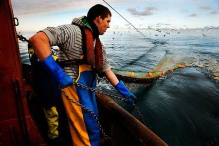 Mycket illegalt fångad fisk i USA