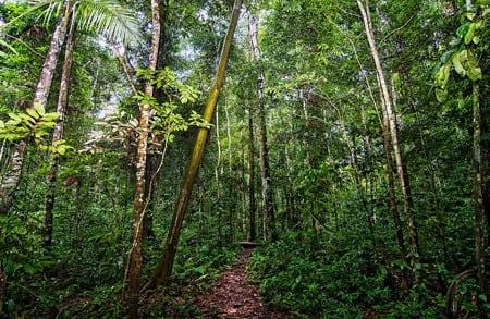 Minskad avskogning minskar utsläpp