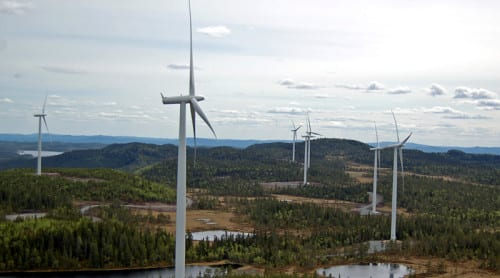 Fåglar flyger på vindkraftverk – dör