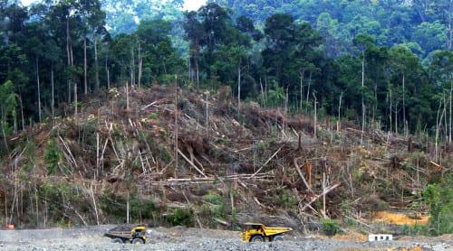 Avverkning av skog för kolgruva i centrala Kalimantan. Andrew Taylor/WDM/CC BY 2.0