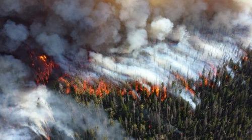 Människan största orsaken till skogsbränder