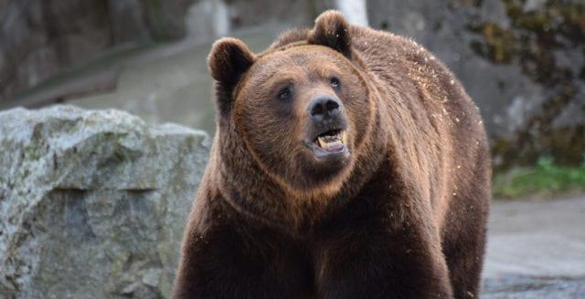 Djurskötare död efter björnattack