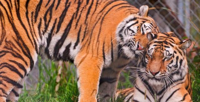 68 procent av världens djur borta – på 46 år