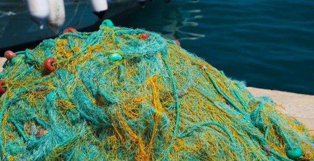 Ålfiske kvar och minskad torskkvot