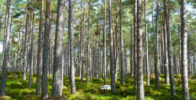 Miljömål om värdefull skog klaras ej