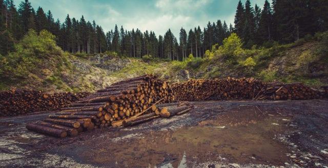Skogens yta fortsätter att minska
