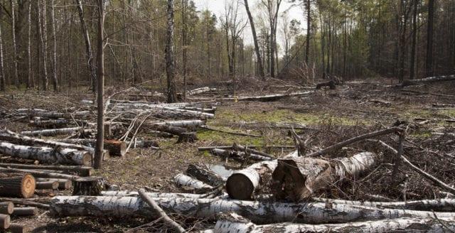 Aktivister stoppar skogsavverkning