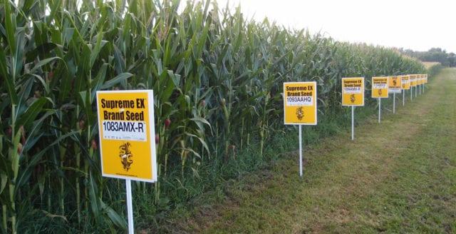 Varför vill Big Food ha GMO?