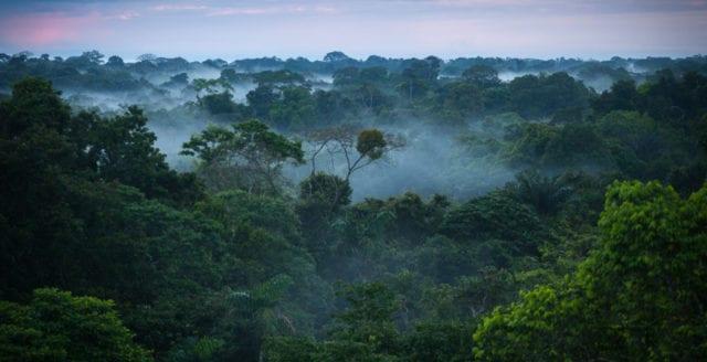 Colombias domstol beordrar regeringen att skydda Amazonas