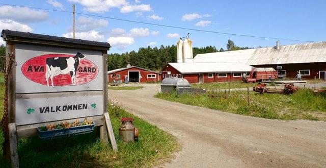Stockholms sista mjölkgård stängs av staten