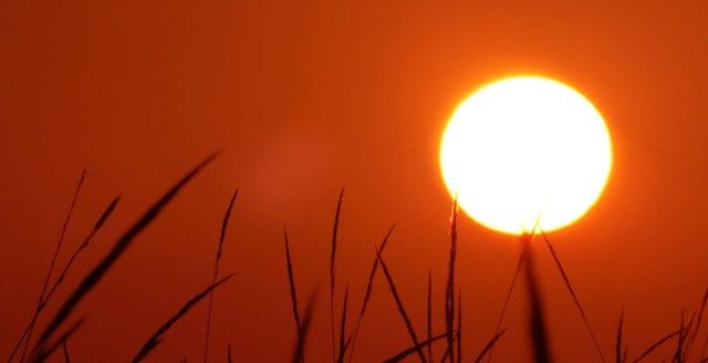 SMHI utfärdar kraftigaste varningen för extremt höga temperaturer
