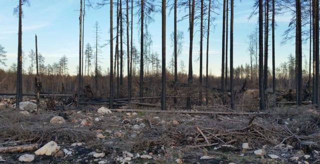 Efter skogsbränderna – miljön en allt viktigare fråga för väljarna