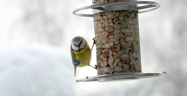 Bra tips på mat till våra vinterfåglar