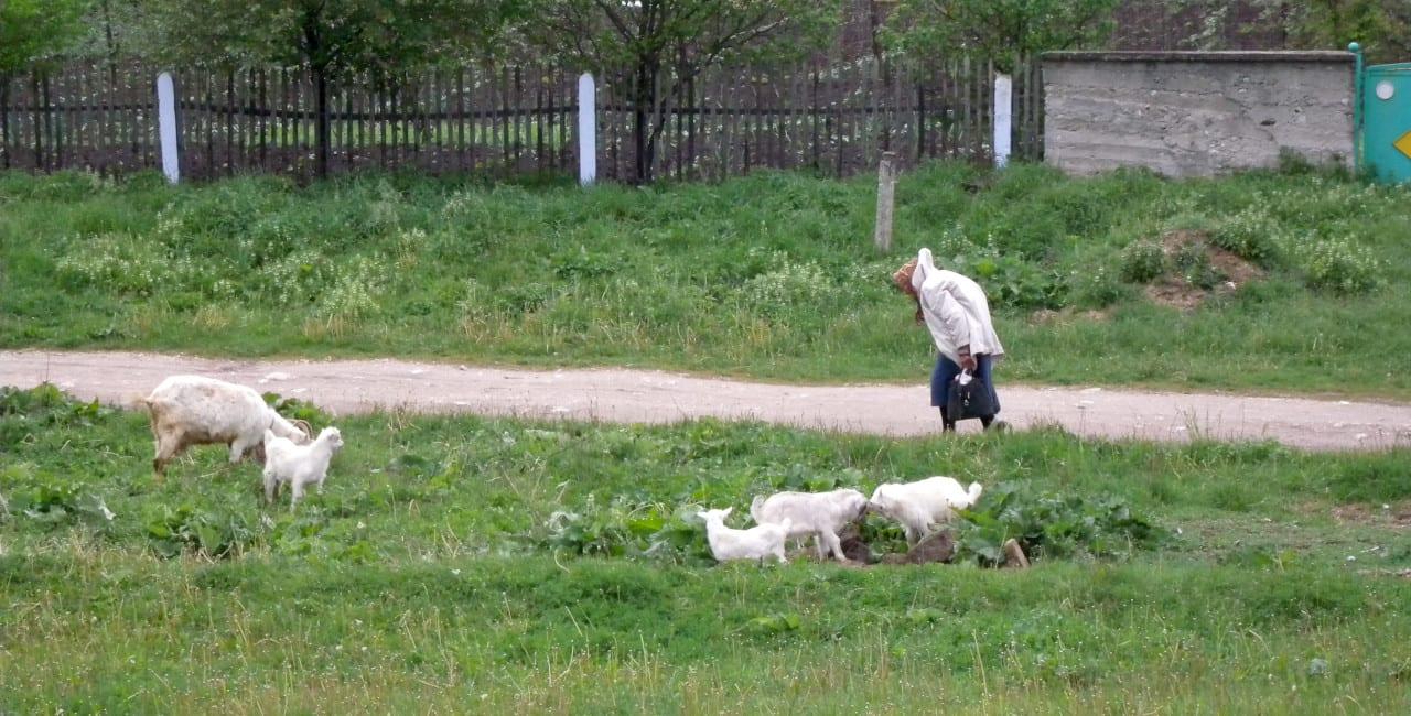 ukraina-bonde2.jpg