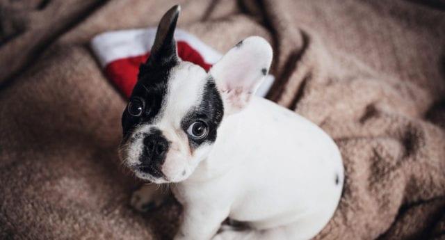 """""""Ge inte bort djur som julklappar"""""""