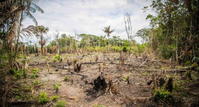 Goda skäl att undvika palmolja