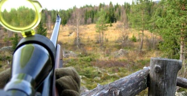 Aktivist på Naturvårdsverket läckte uppgifter om jägare