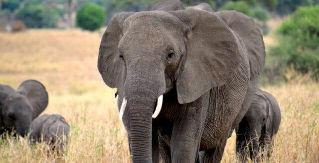 WWF utreds för dödlig jakt på tjuvjägare