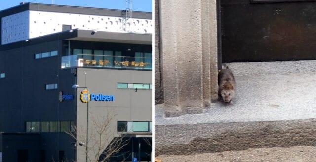 Delar av polishuset i Malmö nedstängt på grund av råttor