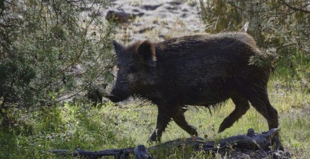 Djurrättsaktivister förstörde viltstängsel