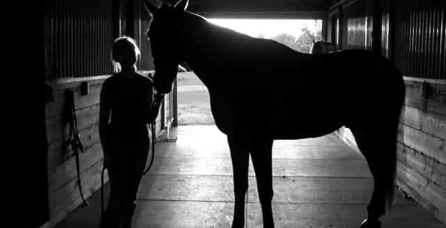 Frankrike: Över 150 hästar stympade i grymma övergrepp