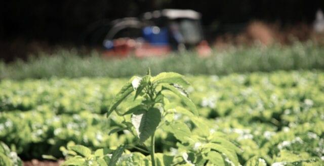 Jordbruksverket: Sverige inte ens självförsörjande på morötter