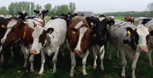 Ursprungsmärkning av mjölk kan dömas ut av EU-domstol