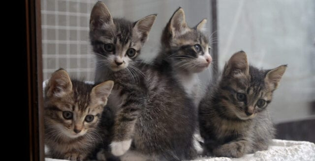 """Sydkorea: """"Seriekattmördare"""" tros ha dödat över 1000 katter"""