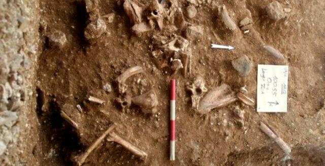 Okänd människoart upptäckt i Israel