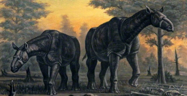 Fossil av okänd jättenoshörning funna i Kina